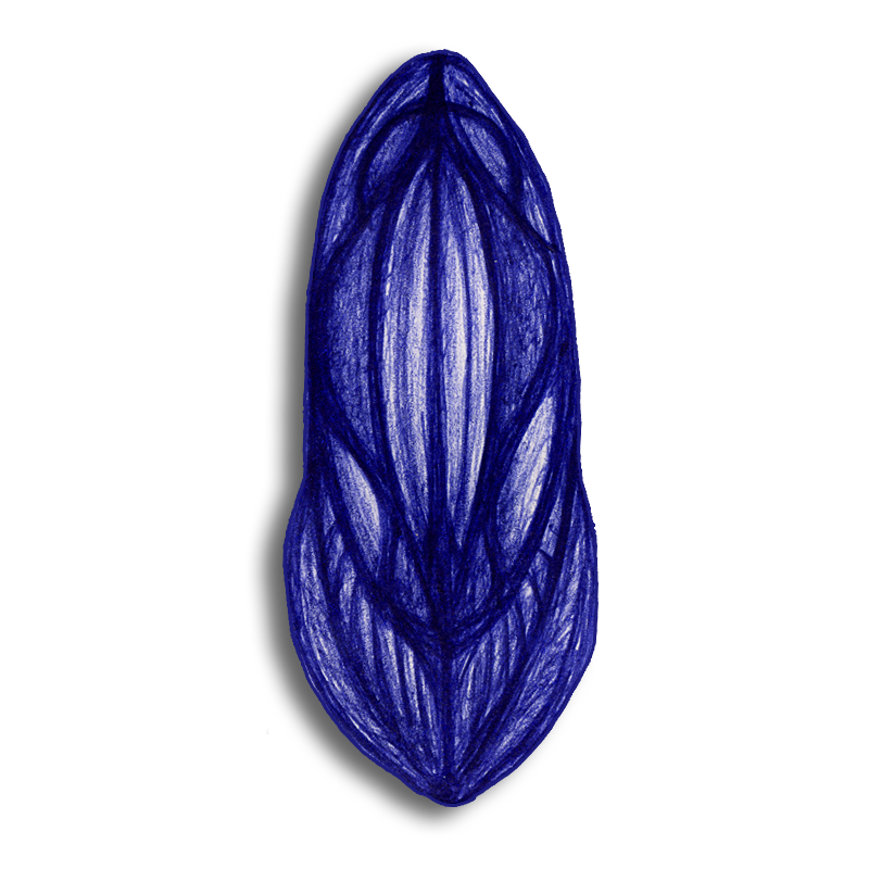 leaf-blue-2014-03-25-e