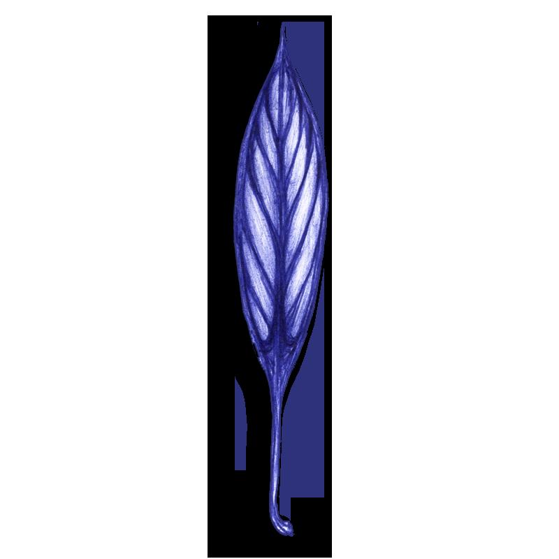 leaf-blue-2014-03-26-a