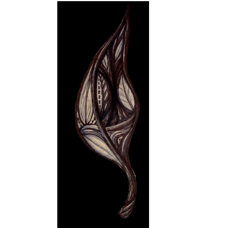 leaf-brown-2014-04-08-22-00